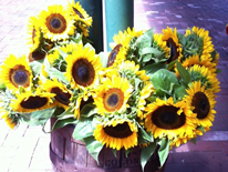 Eastern Market, DC - Sunflowers in Barrel