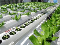 BrightFarms hydroponic garden